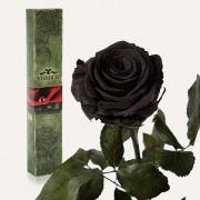 Долгосвежая роза Черный Бриллиант в подарочной упаковке (5 карат короткий стебель)