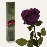 Долгосвежая роза Фиолетовый Аметист в подарочной упаковке (5 карат короткий стебель)
