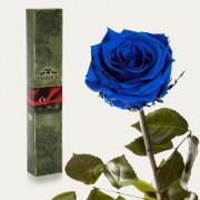 Долгосвежая роза Синий Сапфир в подарочной упаковке (7 карат короткий стебель)
