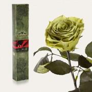 Долгосвежая роза Лаймовый Нефрит в подарочной упаковке (7 карат средний стебель)