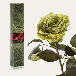 Долгосвежая роза Лаймовый Нефрит в подарочной упаковке (5 карат короткий стебель)