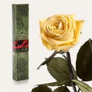 Долгосвежая роза Желтый Топаз в подарочной упаковке (7 карат среднем стебель)