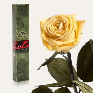 Долгосвежая роза Желтый Топаз в подарочной упаковке (7 карат короткий стебель)
