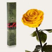Долгосвежая роза Солнечный Цитрин в подарочной упаковке (7 карат короткий стебель)