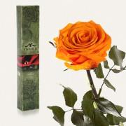 Долгосвежая роза Оранжевый Цитрин в подарочной упаковке (7 карат короткий стебель)