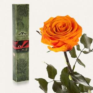 Долгосвежая роза Оранжевый Цитрин в подарочной упаковке (5 карат короткий стебель)
