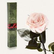 Долгосвежая роза Розовый Жемчуг в подарочной упаковке (5 карат короткий стебель)