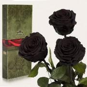 Три долгосвежие розы Черный Бриллиант в подарочной упаковке (5 карат короткий стебель)