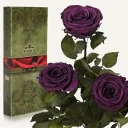 Три долгосвежие розы Фиолетовый Аметист в подарочной упаковке (5 карат короткий стебель)