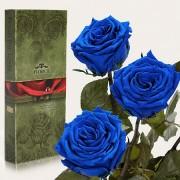 Три долгосвежие розы Синий Сапфир в подарочной упаковке (5 карат короткий стебель)