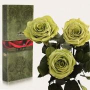 Три долгосвежие розы Лаймовый Нефрит в подарочной упаковке (7 карат короткий стебель)
