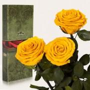 Три долгосвежие розы Солнечный Цитрин в подарочной упаковке (5 карат короткий стебель)