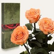 Три долгосвежие розы Золотистый Хризоберилл в подарочной упаковке (7 карат короткий стебель)
