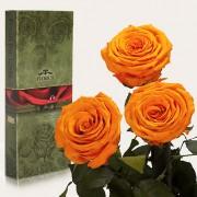 Три долгосвежие розы Оранжевый Цитрин в подарочной упаковке (5 карат короткий стебель)