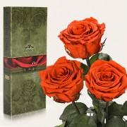 Три долгосвежие розы Огненный Янтарь в подарочной упаковке (5 карат короткий стебель)