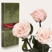 Три долгосвежие розы Розовый Жемчуг в подарочной упаковке (5 карат короткий стебель)