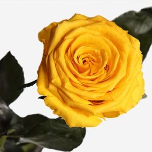 Долгосвежая роза Солнечный Цитрин (5 карат на коротком стебле)