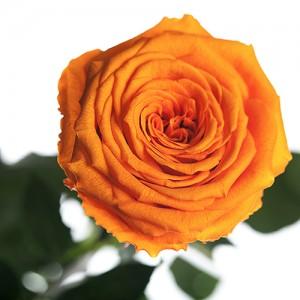 Долгосвежая роза Оранжевый Цитрин (5 карат на коротком стебле)